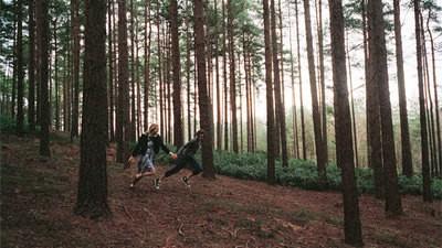 Bourne in den Wäldern