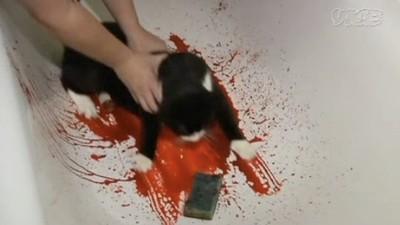 LFW - Charlie Le Mindu färbt seine Katze