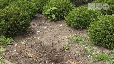 Technisch hoogstaande guerrilla tuinierders
