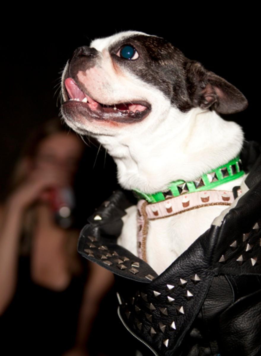 We Had a Doggy Fashion Show!