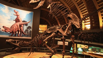 Doing It Dino: a Chat with Dr. Mark Norell