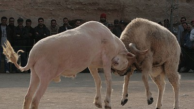 Ram-Fighting with Maradona in Tunisia