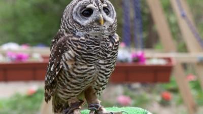 Lovely Owls!