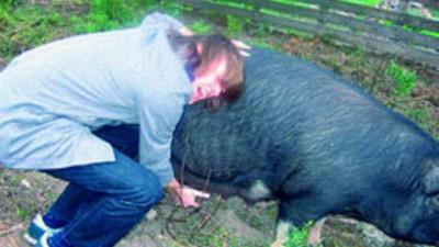 Manipulating Pig