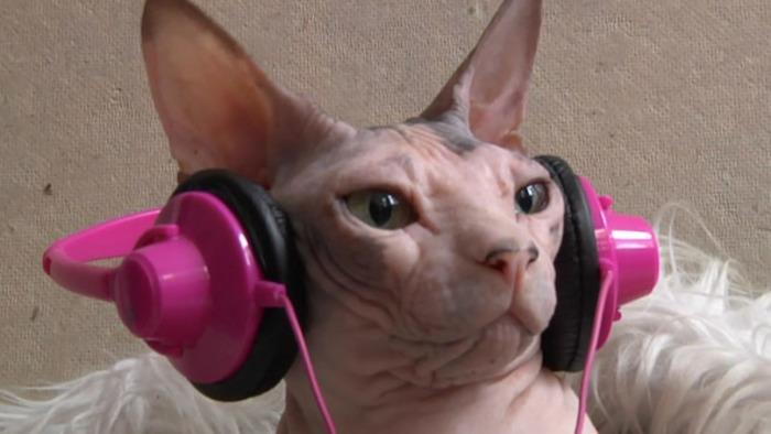 Do Cute Cats Like Gangnam Style?
