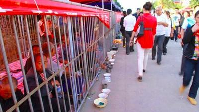 El zoológico de indigentes en China