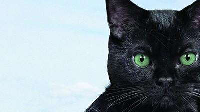 ¡Kuppycats: gatitos clonados!