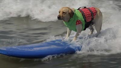 ¡Perros surfistas!