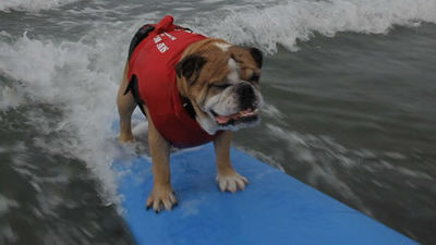 ¡Perritos surfer!