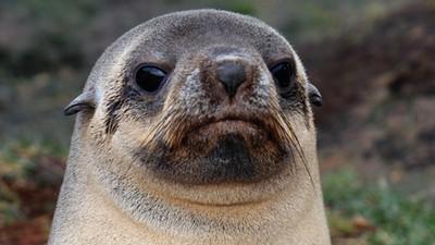 Seals Are Assholes