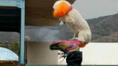 Circo Canino