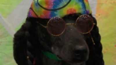 Concurso de Beleza pra Cães