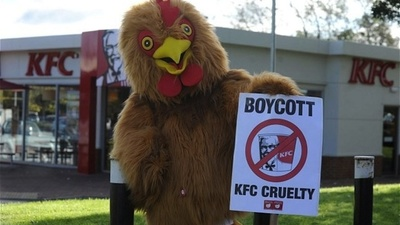 What's More Important: Fried Chicken or Animal Rights?