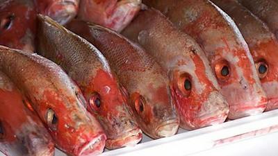 Olor a pescado, LSD y Rare Times