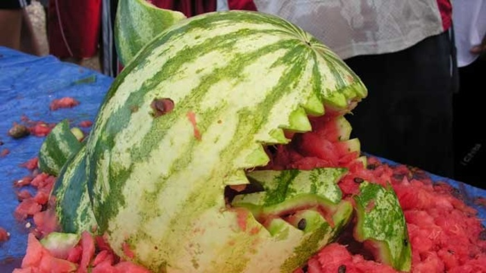 Watermelon Attacks, Rogue Cows and Dog Sperm Thieves