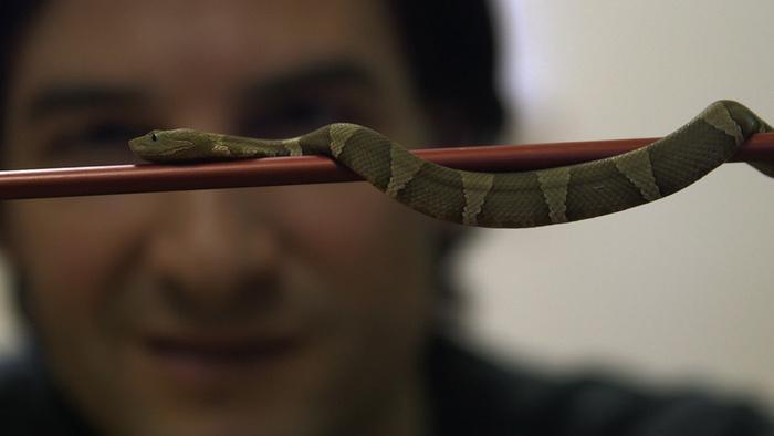 Schlangengift im Blut