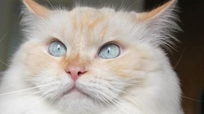 Er is een vrouw, ze maakt sieraden van de haarballen van haar kat