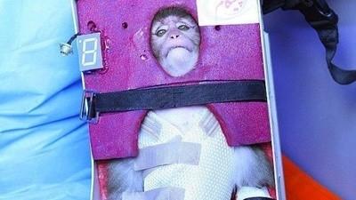 Was versucht der Iran, mit seinen Space Monkeys zu verbergen?