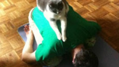 Ioga com gatinhos
