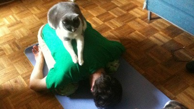 Yoga cu pisici