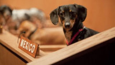 As Nações Unidas dos dachshunds