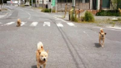 Dentro das Cidades Radioativas Abandonadas no Japão