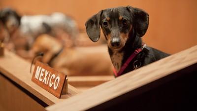 Câinii diplomați de la ONU