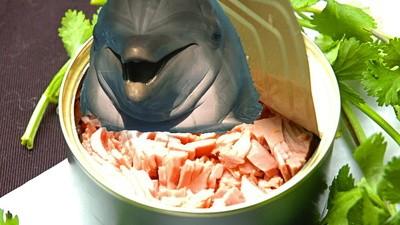 Dolfijn aangetroffen in blikjes tonijn, of leugens aangetroffen in de media?
