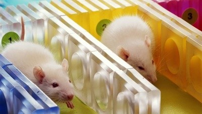 Talking Animal Testing