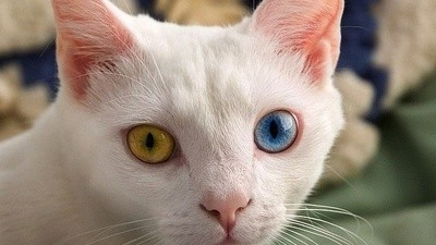 Are Cat Spies Sent by Aliens?