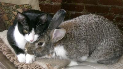 Rabbit-Soft Self-Care