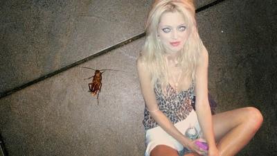Die Kakerlake und die Koksnase
