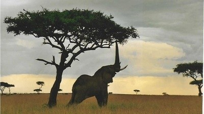 Are Drones Really Helping to Save Rhinos and Elephants from Poachers?