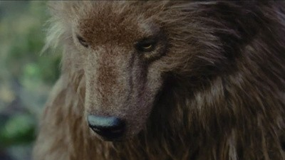 'Bear' by Nash Edgerton