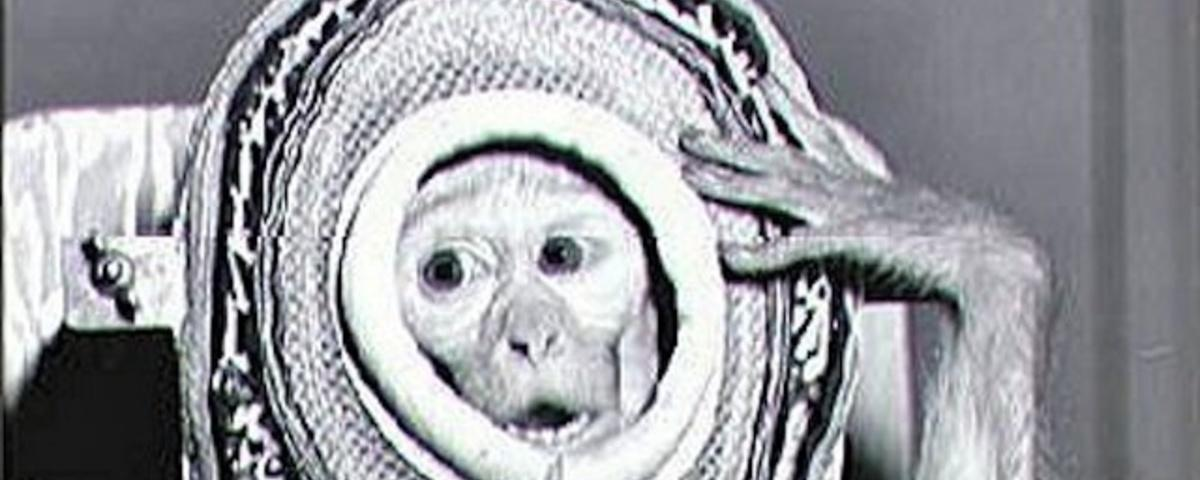 What Are Iran Trying to Hide with Their Space Monkey?