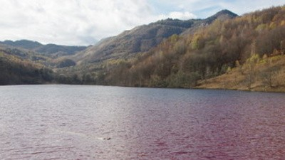 Romania's Fish Aren't Being Asphyxiated, Just Poisoned