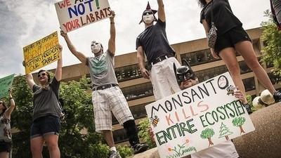 Na heel veel mailtjes en heel veel weken kreeg ik eindelijk de woordvoerder van Monsanto te pakken