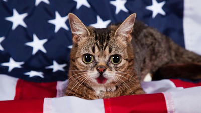 An Important Message from Lil Bub