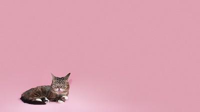 Itty-Bitty Kitty, Giant Spirit