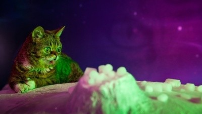 Lil Bub & Friendz - Part 1
