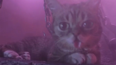 'Lil Bub & Friendz' Sneak Peek
