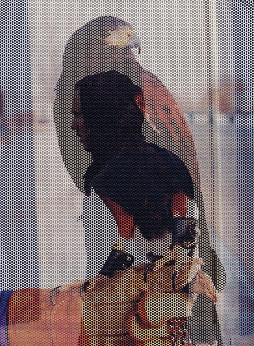 El águila y la rata