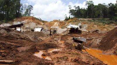Febra aurului distruge pădurea ecuatorială din Surinam