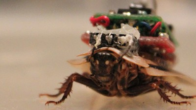The World's First Commercially Available Cyborg Is a Cyborg Cockroach