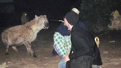 Las hienas de Etiopía comen de tu boca