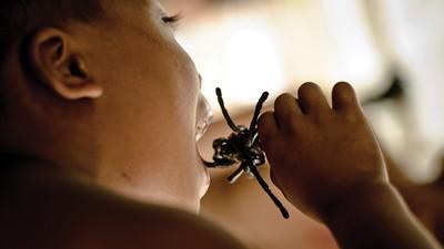 Les chasseurs d'araignées prépubères du Cambodge