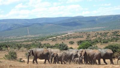 Chili-Drohnen zur Elefantenrettung