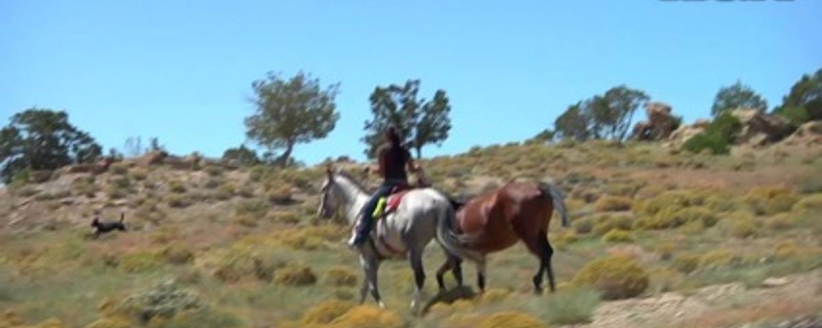 Bares, Broncs, and Bulls - Trailer