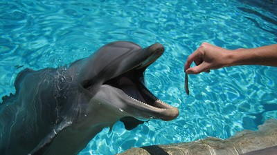 A New Water Park in Japan Will Let You Play with Dolphins While You Eat Dolphins
