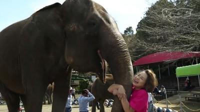Tărâmul elefanților!